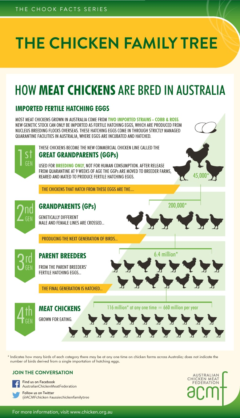ACMF_ChookChat_The-Chicken-Family-Tree_Infographic_RevDec20_780x1360px-005